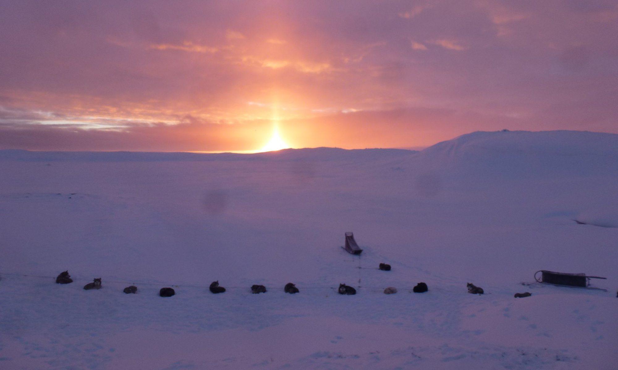 Polardogs Sweden