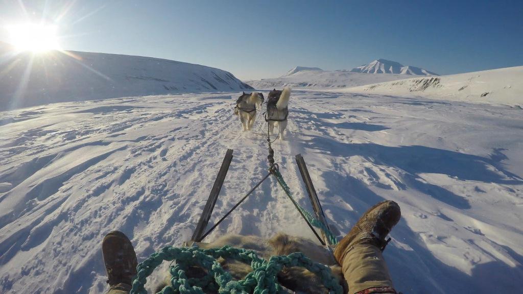 Polardogs Svalbard Sleddog Tours and Expedition